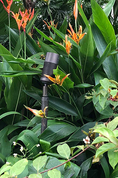 Gardens at Night Singapore Garden Festival 2018 accent lighting with riser