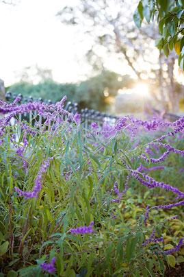 Gardens at Night Project in Focus Inspired Exteriors Outdoor Lighting Australia